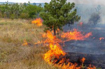 лесной пожар заповедник Денежкин камень Свердловская область