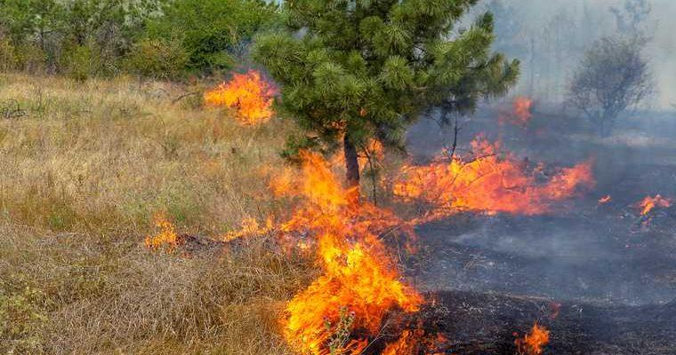Свердловский заповедник горит из-за плохой охраны