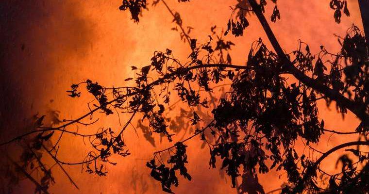 Челябинская область Ильменский заповедник лес пожар минэкологии