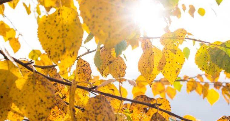 Синоптики пообещали россиянам две волны тепла осенью